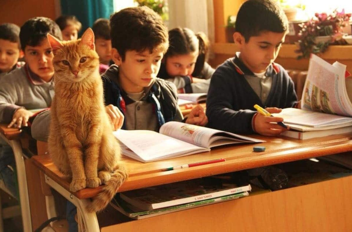 cat attends school in turkey 1