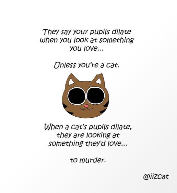 iizcat murder love art print