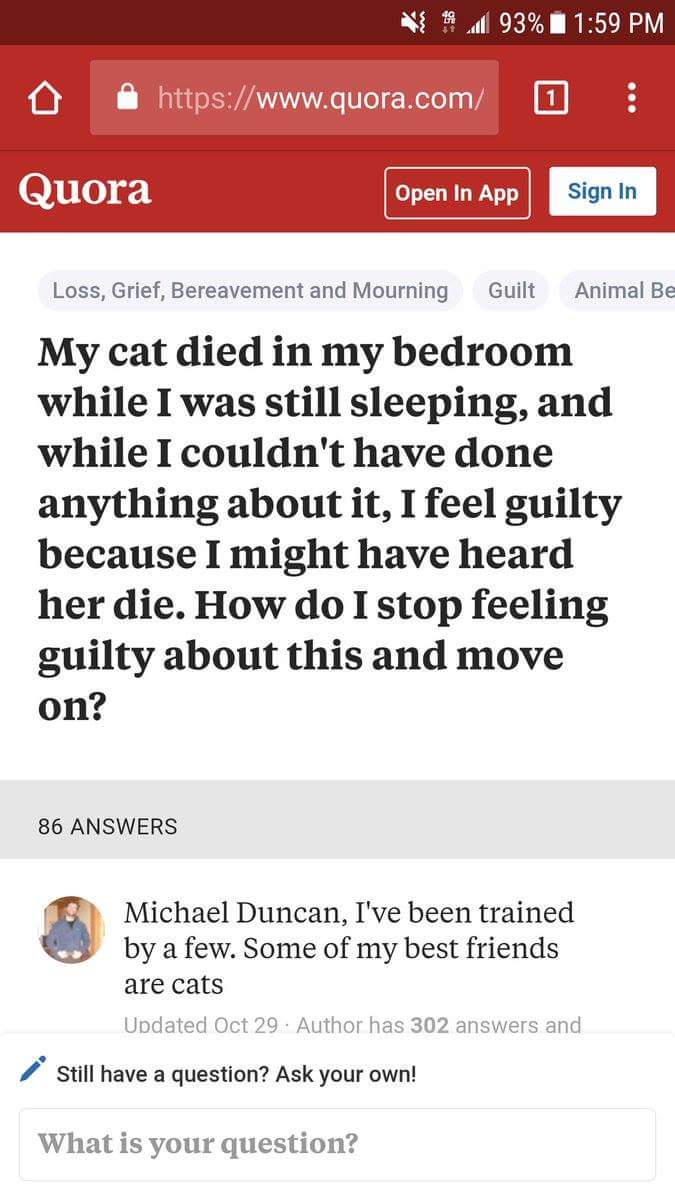 cat died and stranger gives great advice 1