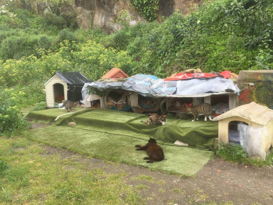 cat village 8