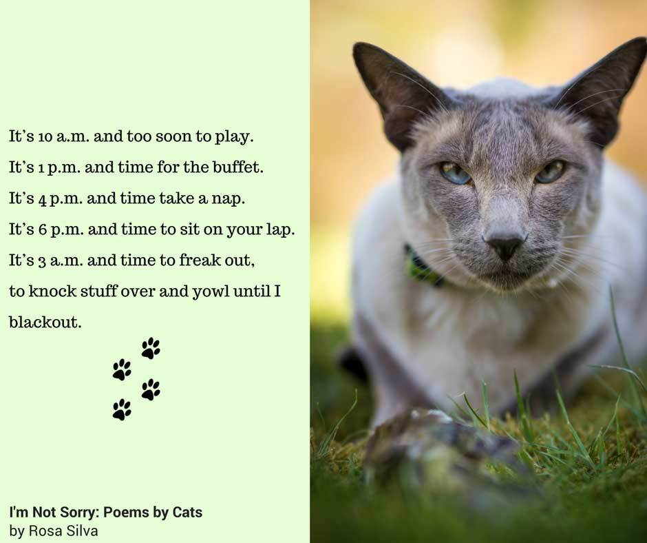 cat poems 1