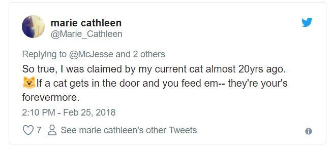 cat tweet 2