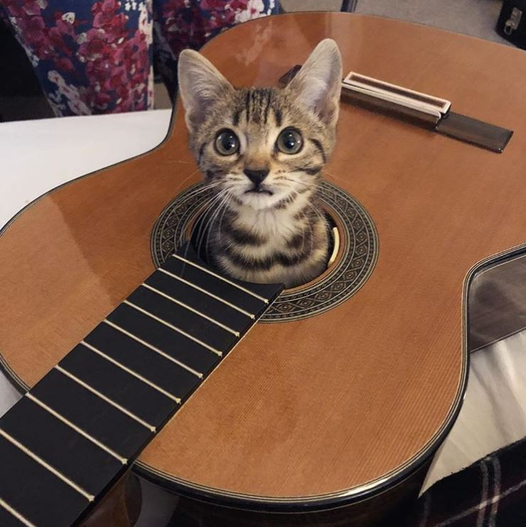 kitten loves guitar