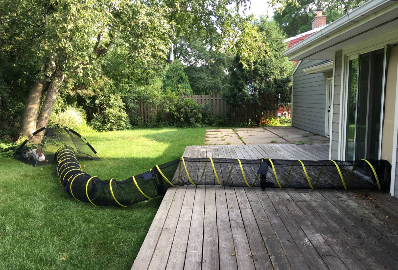 outdoor cat play pen