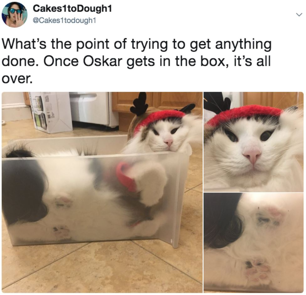 cat stuffed in box 2