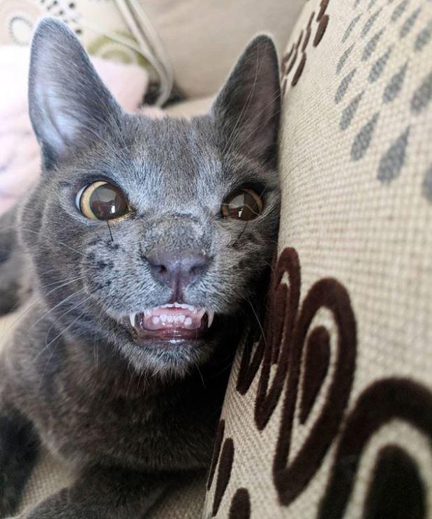 smiling cat 12