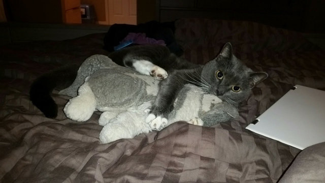 cat and stuffed animal package 1