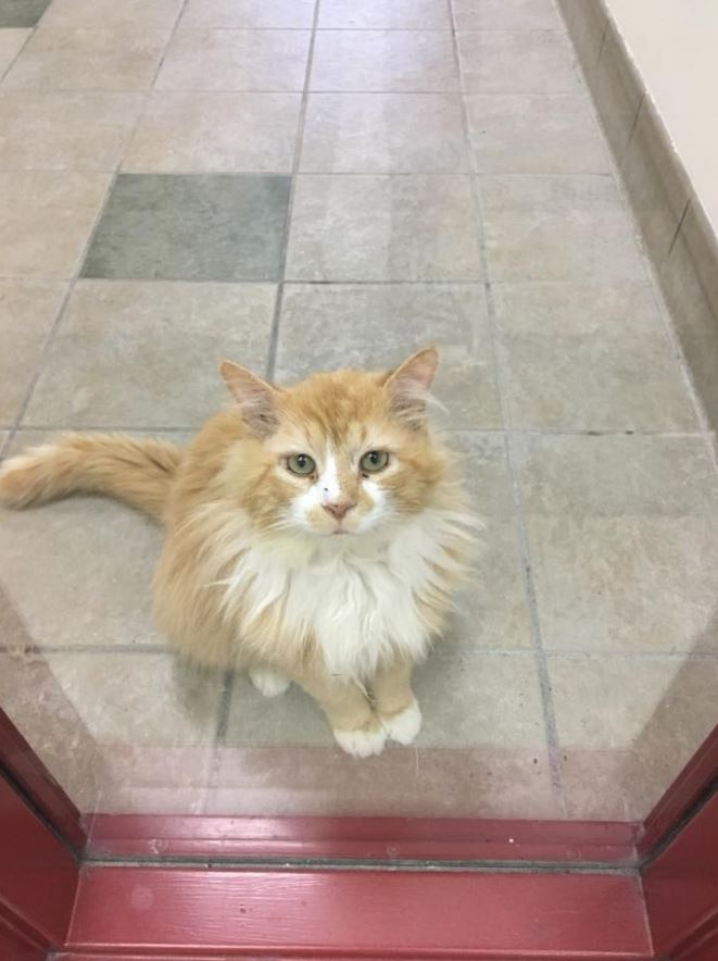 cat walks home 12 miles and gets adopted 3