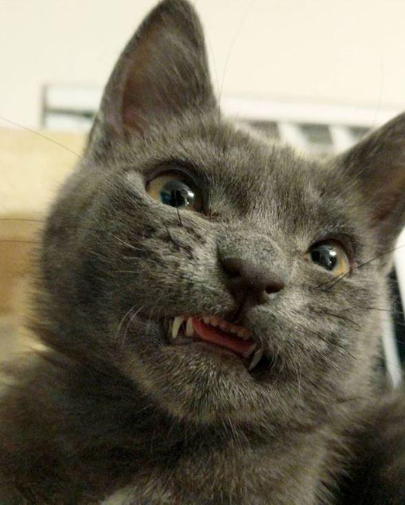 smiling cat 1