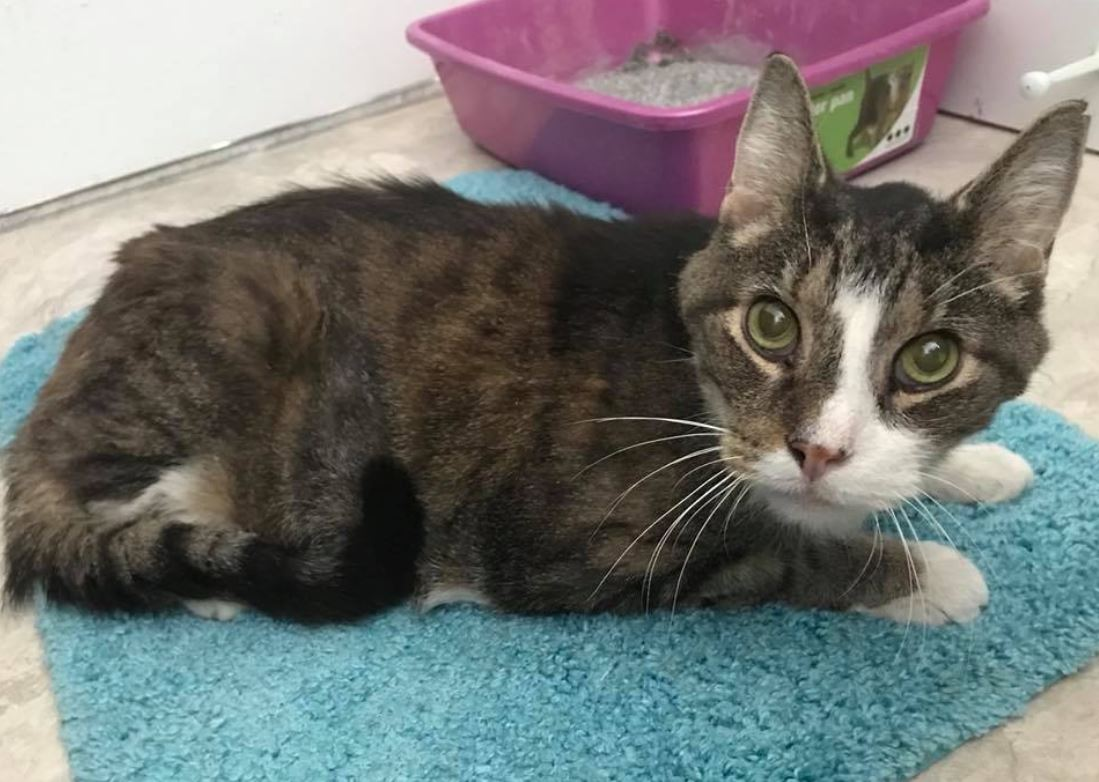 woman adopts senior cat 2