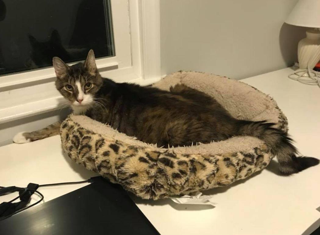 woman adopts senior cat 5