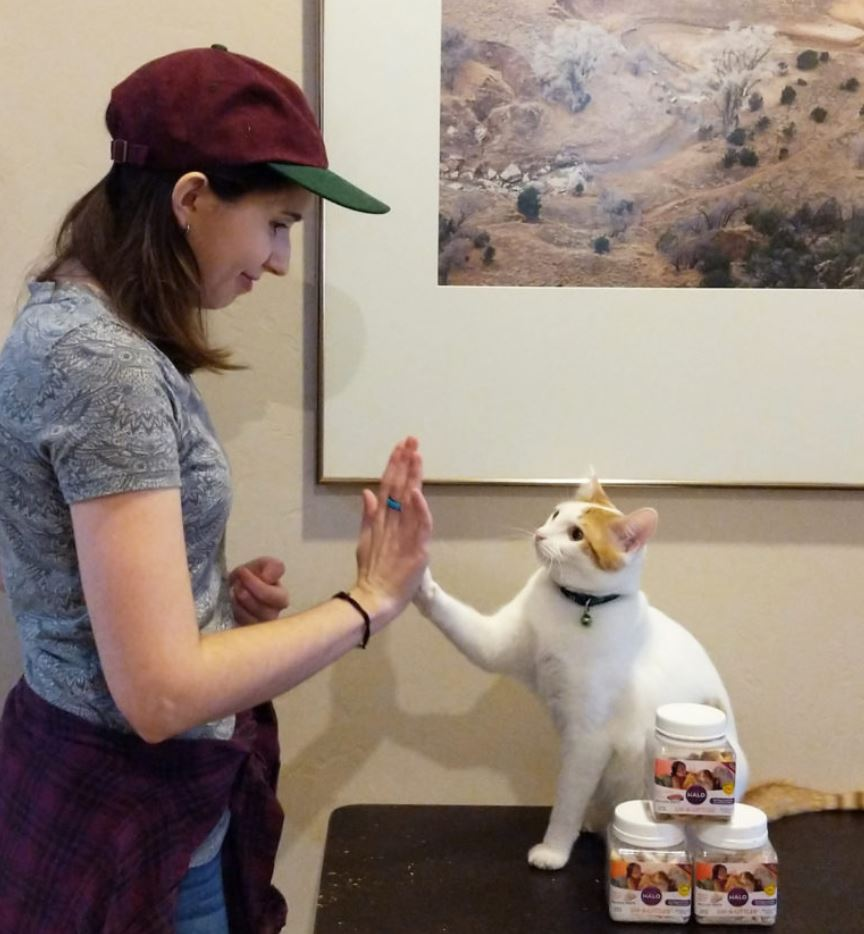 shelter teaches cats how to high five to make them more adoptable 4