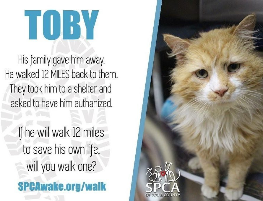 cat walks home 12 miles and gets adopted 5