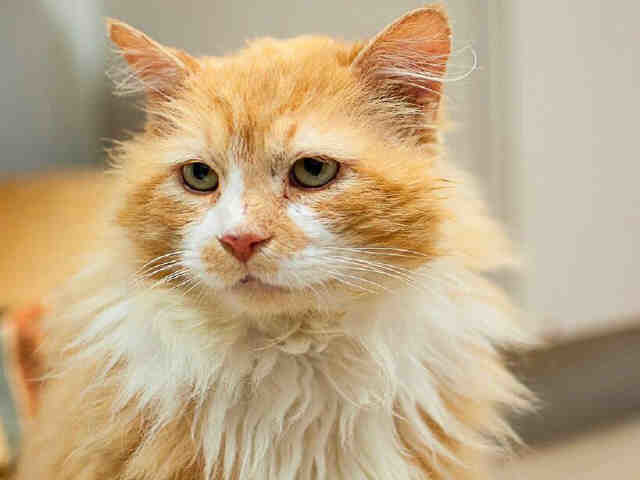 cat walks home 12 miles and finds new family