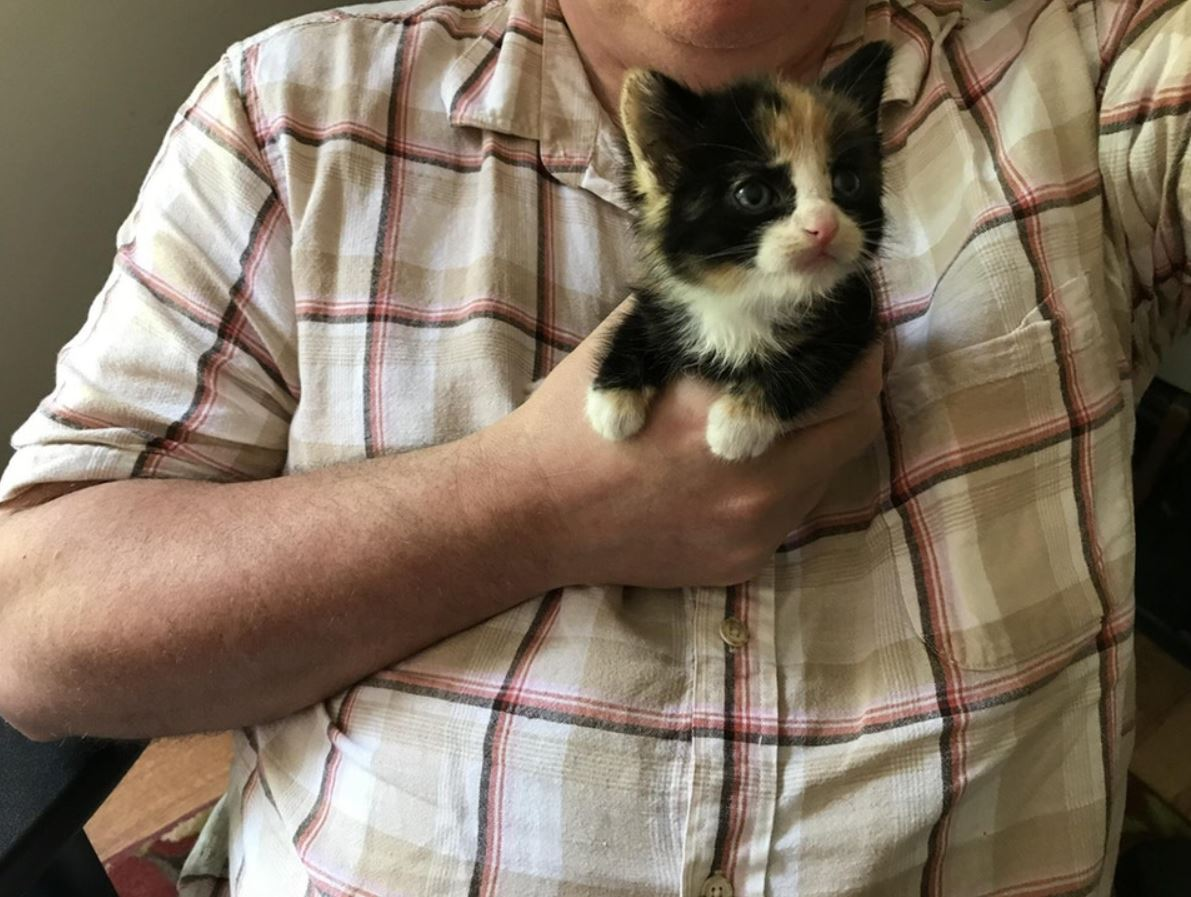 dad finds kitten 2