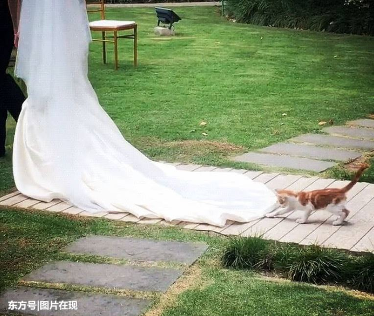 kitten follows the bride 4