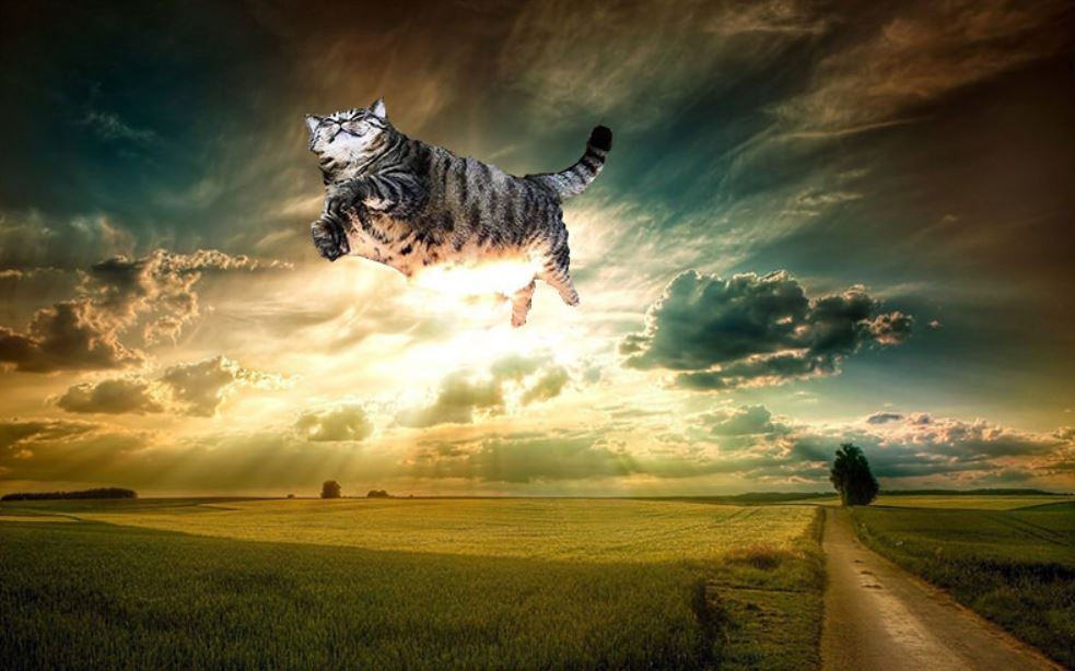 cat photoshop 4