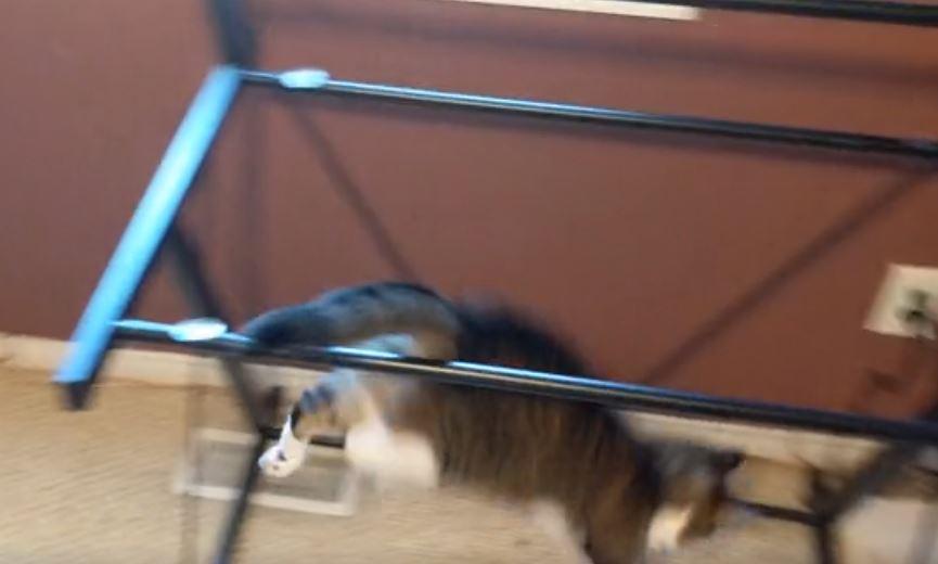 cat jumps on desk 5