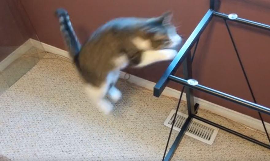 cat jumps on desk 2