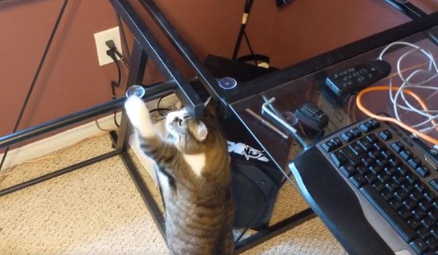 cat jumps on desk 7