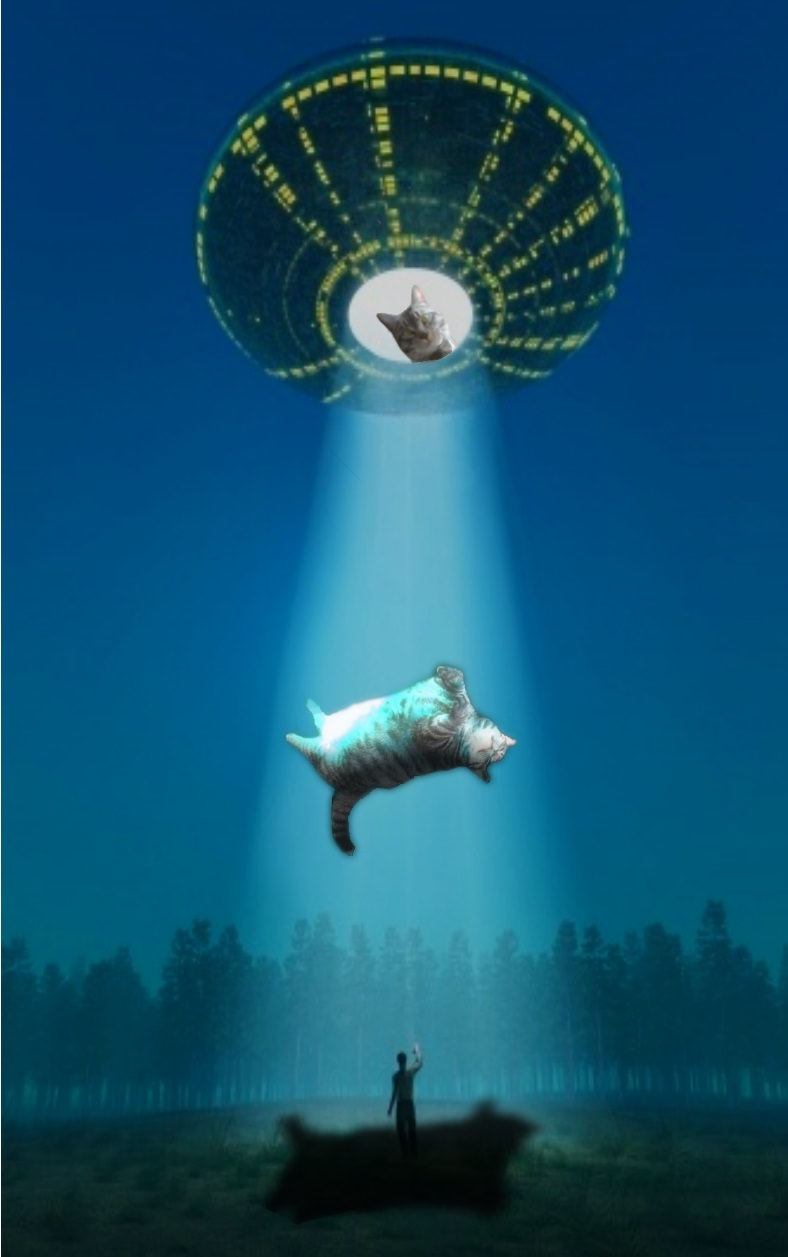 cat photoshop battle 3