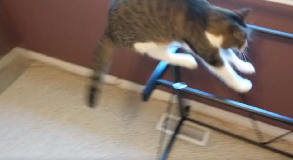 cat jumps on desk 3