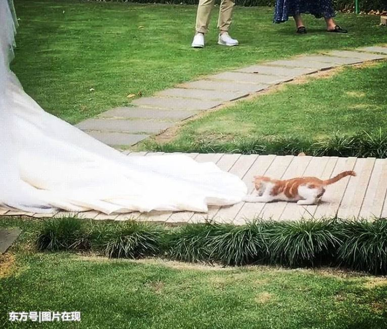 kitten follows bride 3