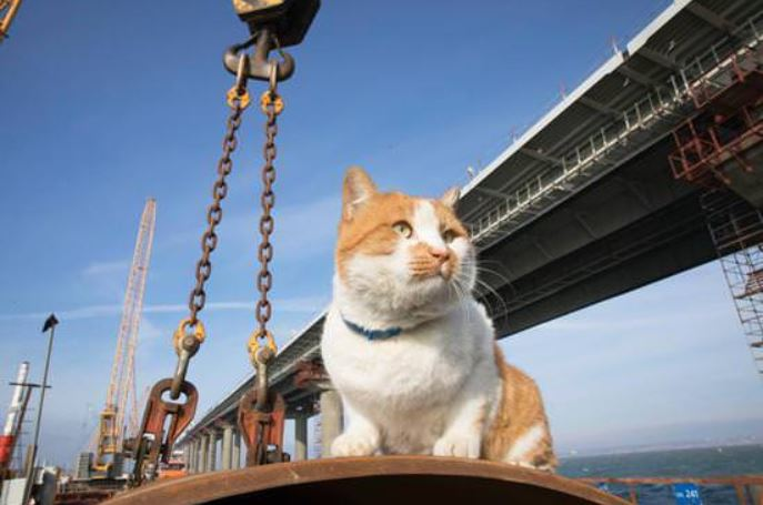 cat crosses bridge 9