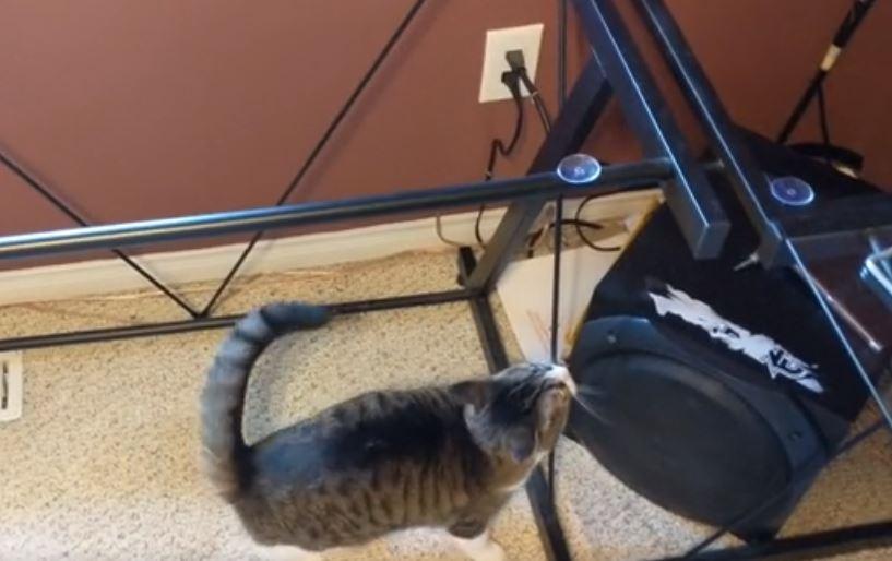 cat jumps on desk 6