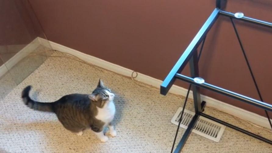 cat jumps on desk 1