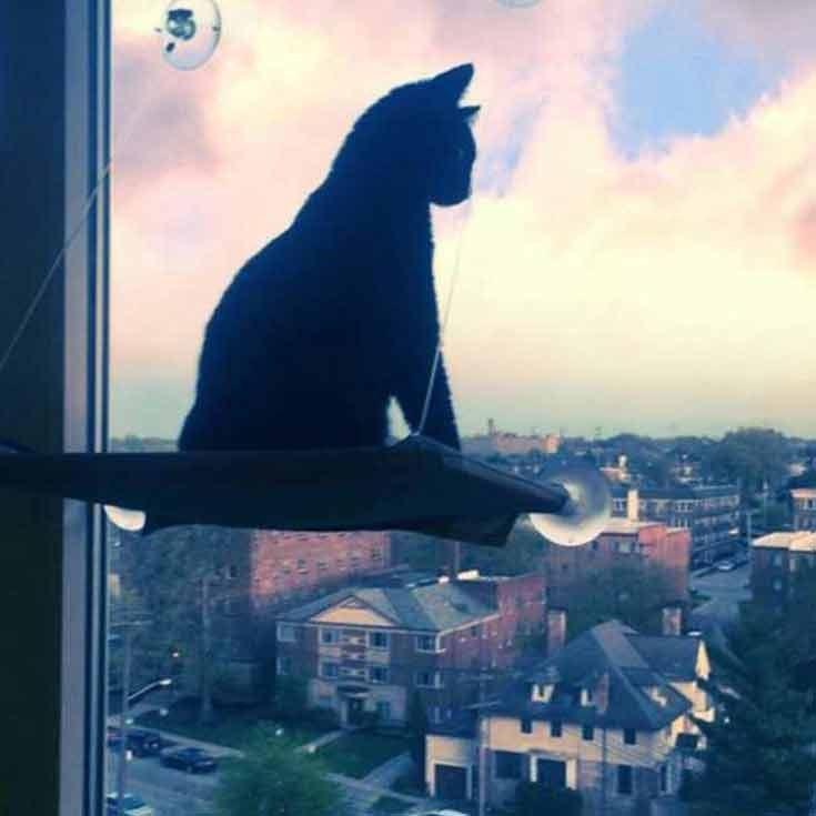 lovesick cat misses human 3