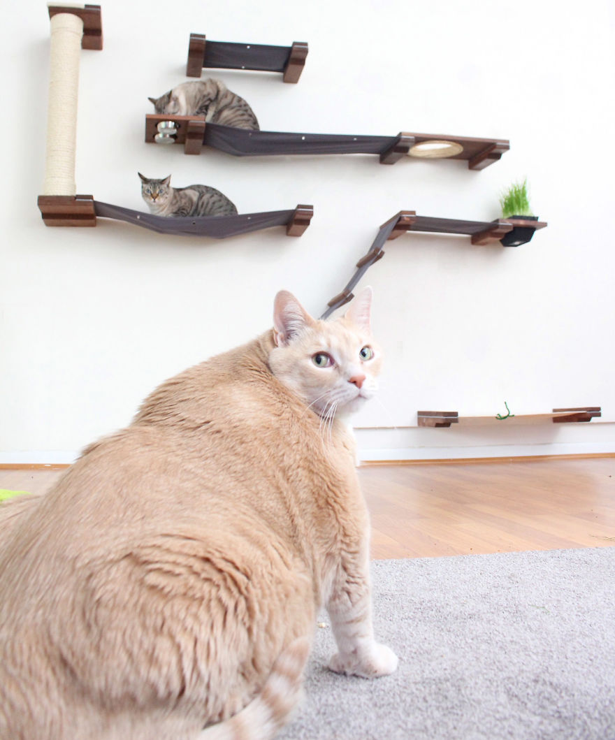 33 pound cat 16