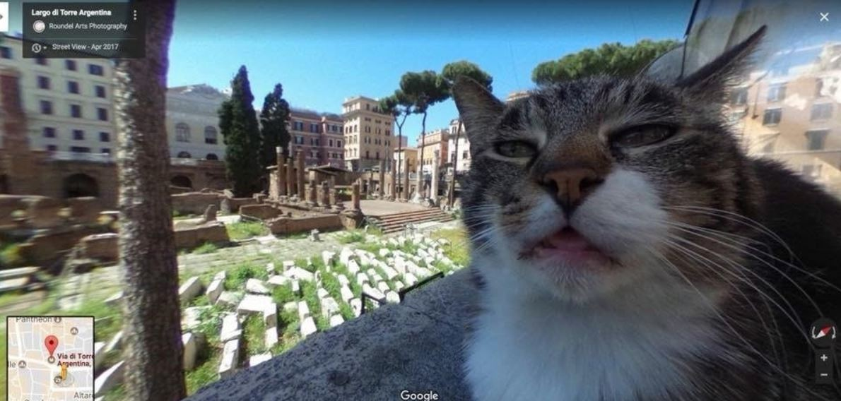 cat in google street view