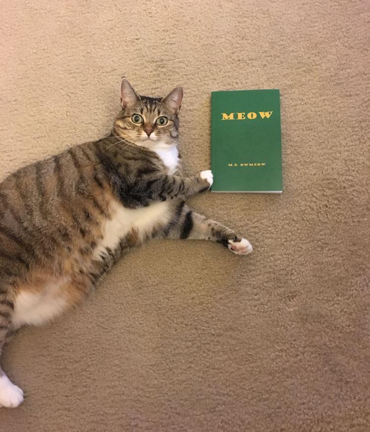 meow book 1