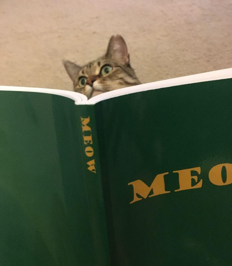 meow book 2