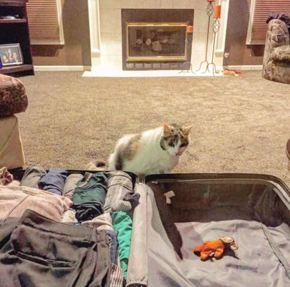 cat put his toy in his suitcase