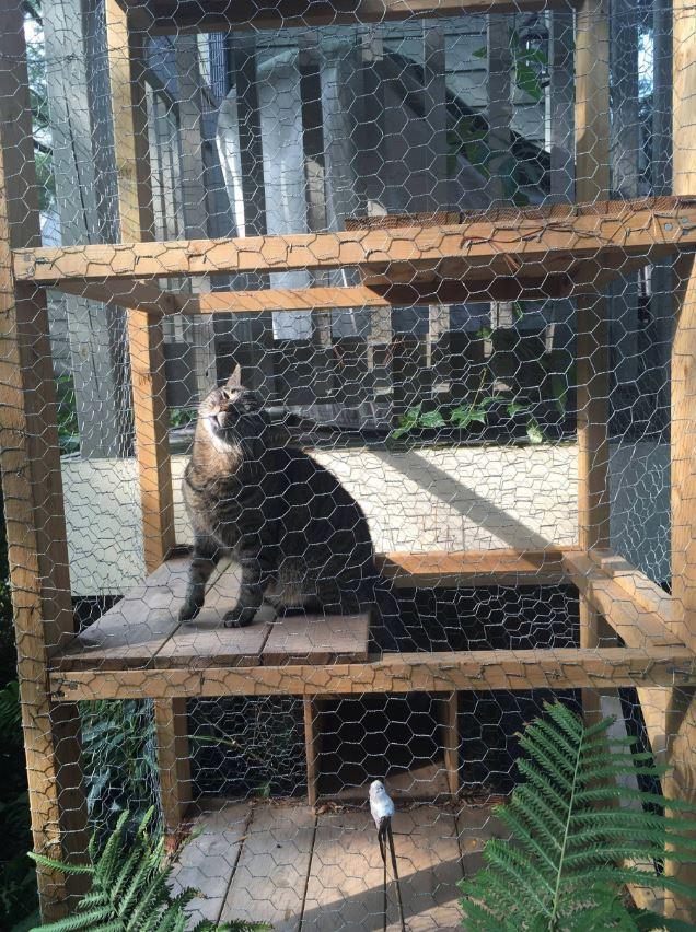 cat tower 5