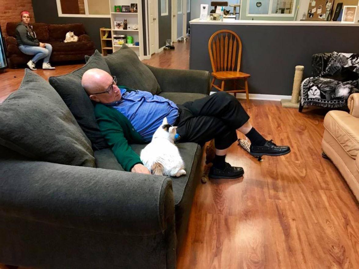 man falls asleep while brushing cats 3