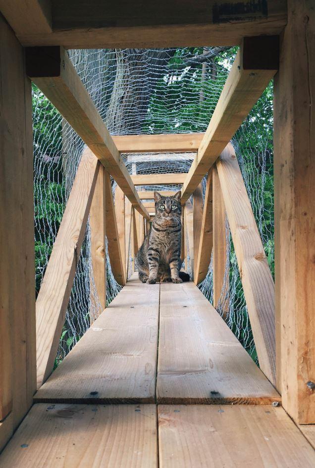 cat tower 6