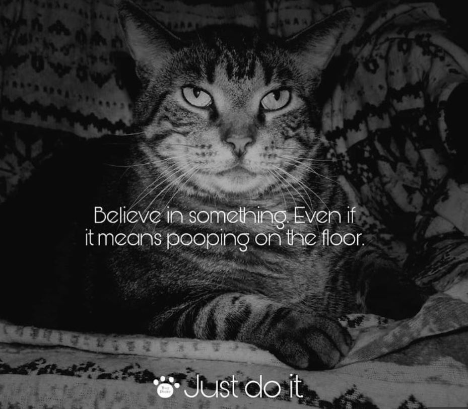 5 Nike Just Do It cat memes to make your day