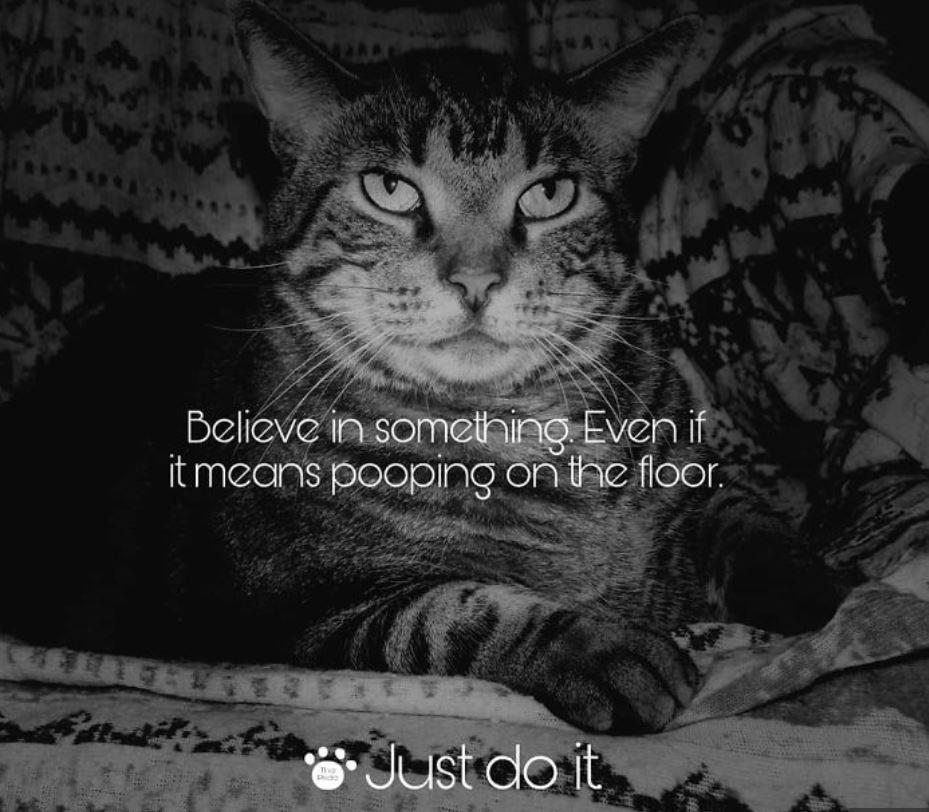 nike cat memes 4