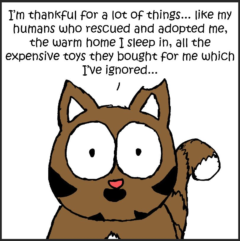 thankful iizcat comic 1