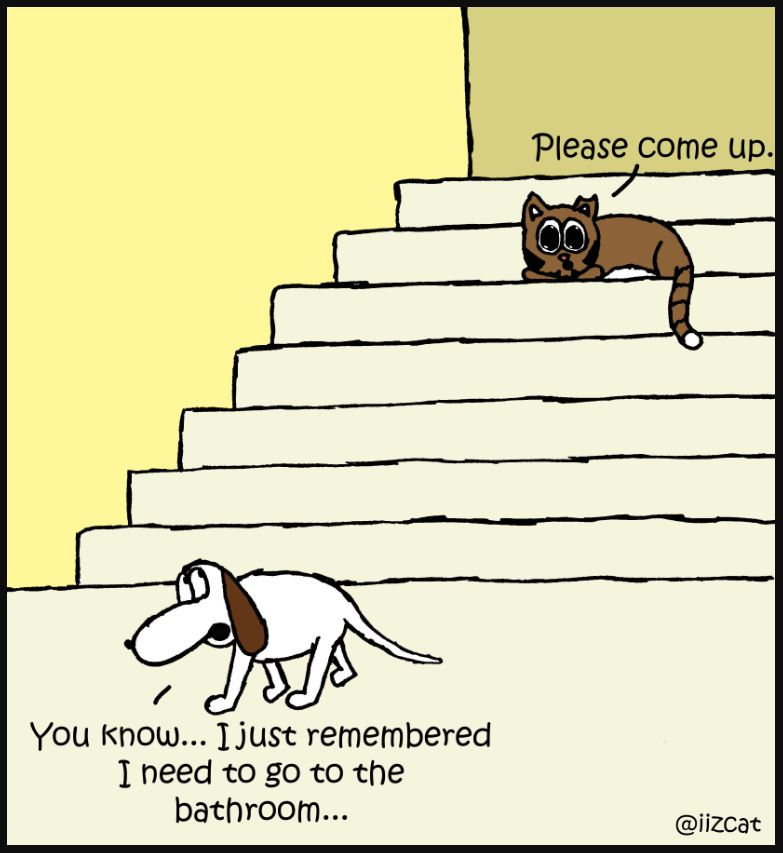 iizcat cat and dog on stairs 6