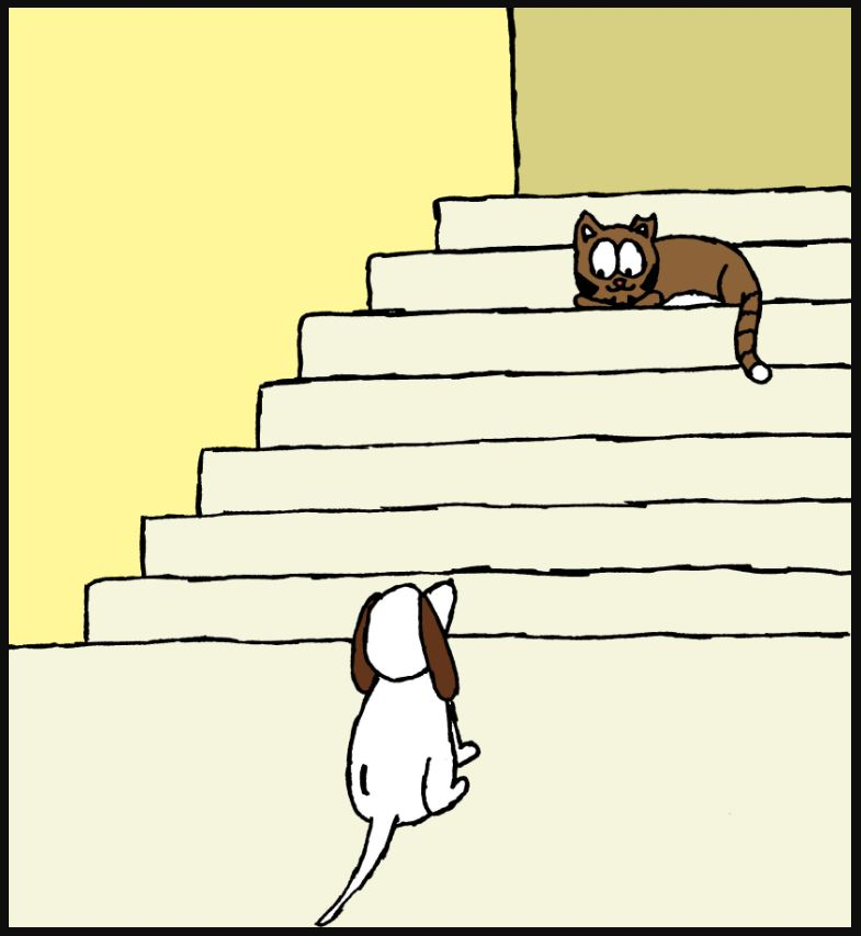 iizcat cat and dog on the stairs 1