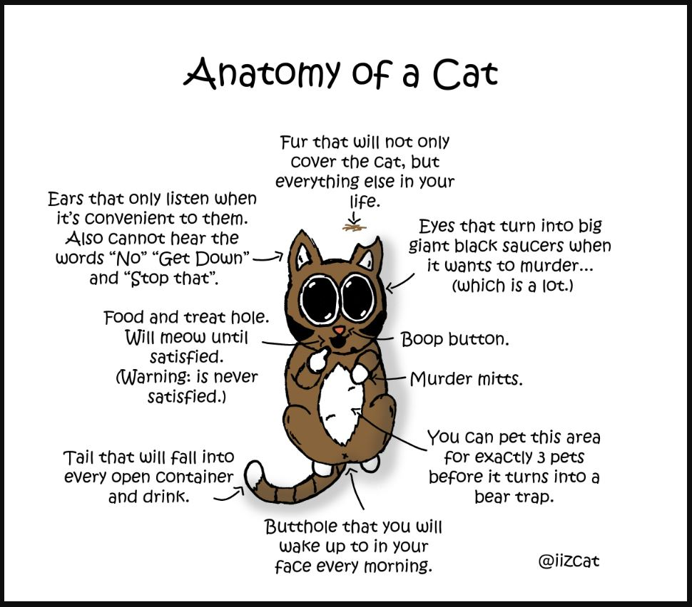 anatomy of a cat comic