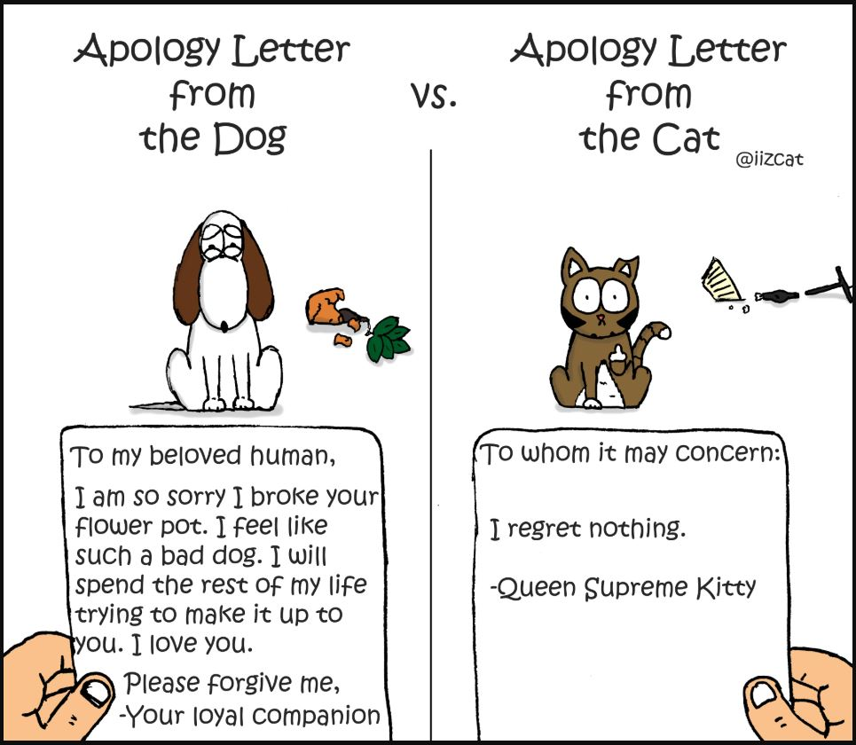 apology letter from the dog vs the cat