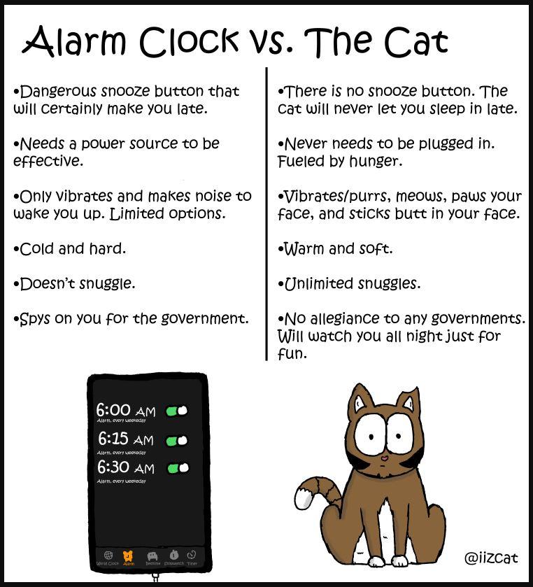cat vs alarm clock