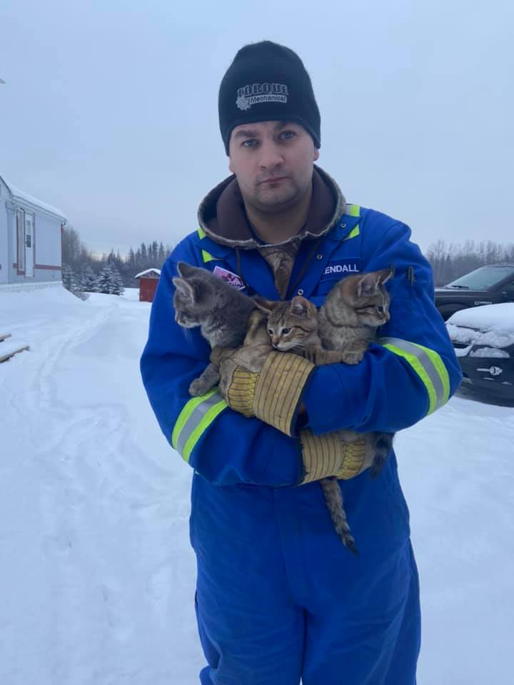 man rescues kittens with coffee
