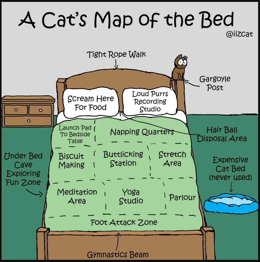 cats map of the bed