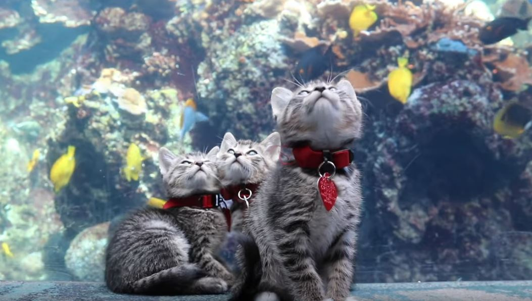 kitten field trip to aquarium 1